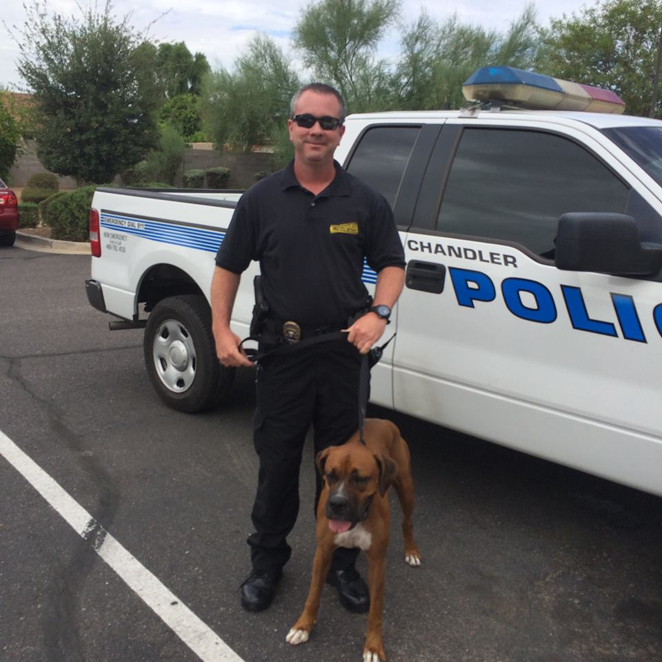 Dog rescue chandler police department for Department of motor vehicles chandler arizona